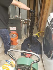 A plumber pulls roots out of a basement drain using a drain snake in Aurora 80015.